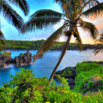Hawaii Coffee Culture Sunset Palm Tree Water